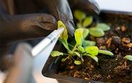 Pflanzen mit Superkraft